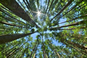New ESG Disclosures for asset managers